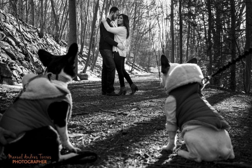 dogs looking at couple during engagement session